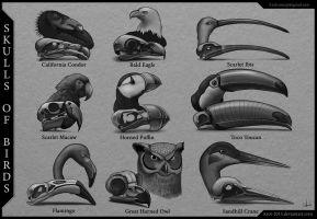 Skulls of Birds by Azot2015