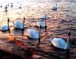 Swans At Sunset - Gravesend Promenade by Nigel-Hirst