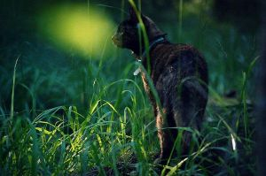 forest cat by moussee