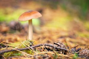 Forest mushroom by Zelma1