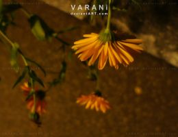 -+ dont talk to me +- by Varani