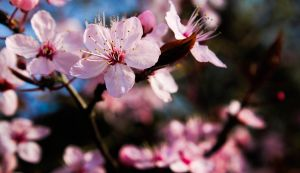 Bloom by ScatteredFaces