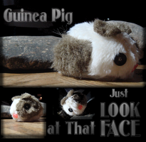 Guinea Pig by wolfmeg