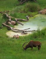 At The Watering Hole 581 by caybeach