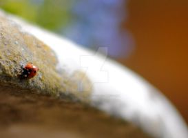 Ladybird by MaePhotography2010