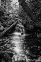 Through the Mossy Logs BW by mjohanson