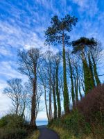 Tall trees by peterpateman
