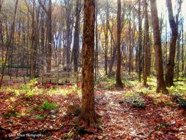 Autumn Luster by GlassHouse-1
