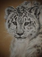 Snow Leopard by beccalynch
