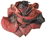 Dead Rose PNG by LavitaDistress