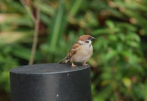 Little Sparrow by MatthewLCH