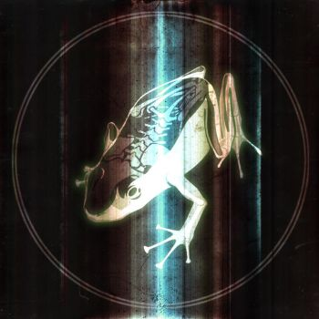 animal exposure - frog by Ville