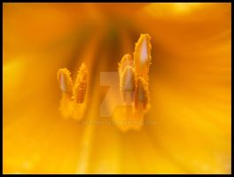 Anthers by dcl-photo