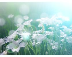 dreamingFlowers by love1008