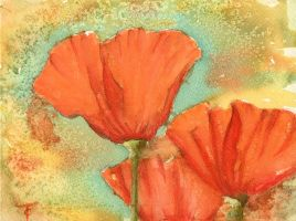 Poppies by tiffc