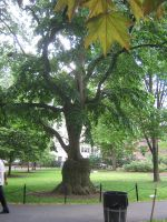 gnarly tree 01 by CotyStock