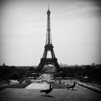 Eiffel Tower Pigeon by lostknightkg
