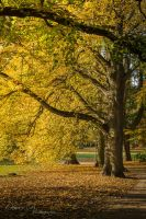A Walk in the Park by OliverBPhotography
