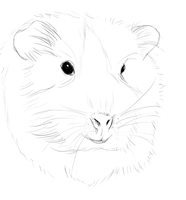 Guinea pig sketchyness :D by crazykate1