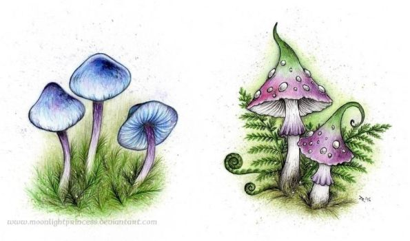 Fairy mushrooms by MoonlightPrincess