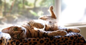 Silly kitty by rebekahlynn-photo