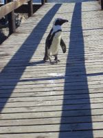 Boardwalk Stroll by Maraskia