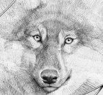 dog days are over by DanielGrzeszkiewicz
