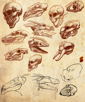 Your skulls by HaanPere