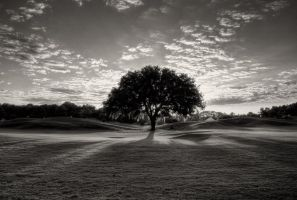 Desaturated Alignment by Bawwomick