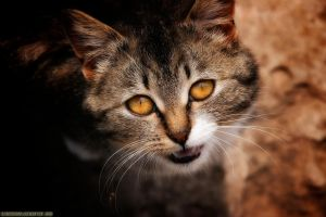 Cat's Eye by BlackMan23