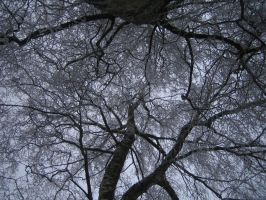 Winter Branches by BHDH