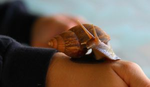 curious snail by snoboarderEm
