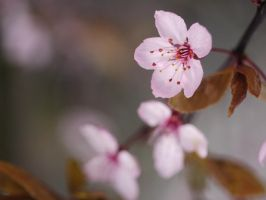 Spring flowers. by asaluiphotography