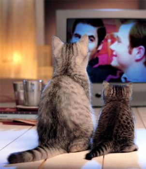 Cats love Klainebows too by DestielandCrowley