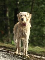 Mixed-breed dog 4 by wakedeadman