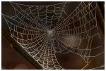 Web by evaPM