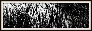 Cattails by FallisPhoto