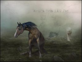 Whats this life for? by horsecrazytwins