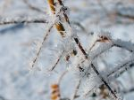 winter frost by sataikasia