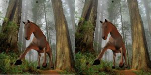 STEREOGRAM of a horse by TheUncle