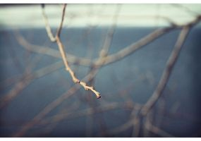 Branches I by niceparabola