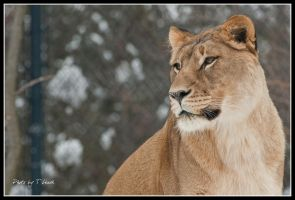 Regal Queen by tleach0608