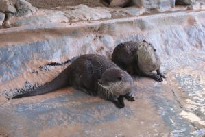 Underwater World : Otters 5 by Aximili-6116