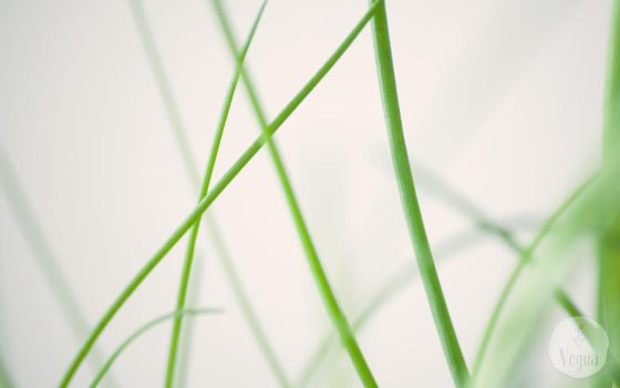 Chives Background by quansie
