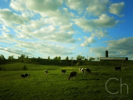 Moo by Champineography