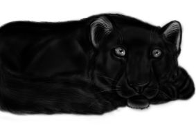 Panther by Themystichusky