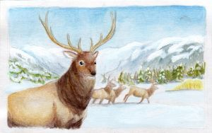 Mountain Elk by soyrwoo
