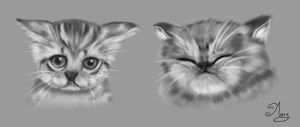 Cats :) by mary3m