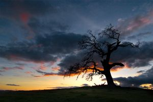 SP3 - LoneTree by killersnowman