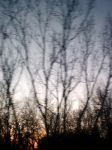 Blurred Trees by Iliath